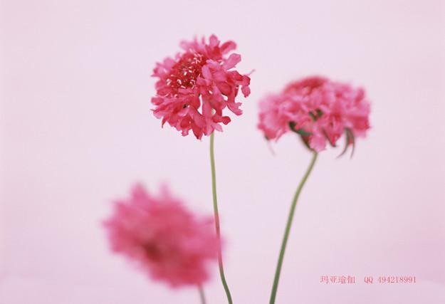 瑜伽语言开的花