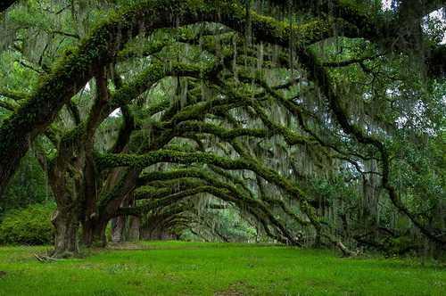世界上最赞的18棵树,美死!