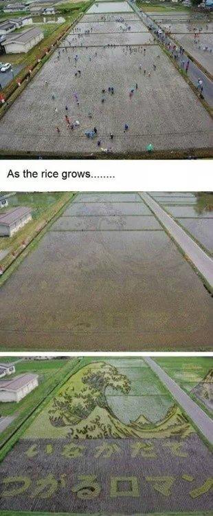 回家割稻谷去吧,看有这个效果不