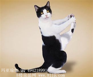 迷罗【养生瑜伽】