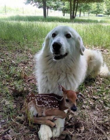 养了狗以后,我才发现……