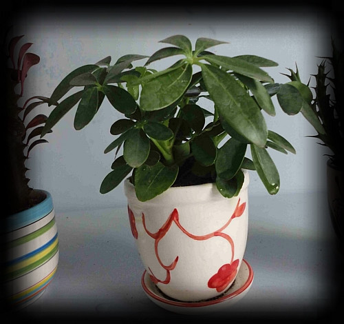 吸毒植物,选一盆搬回家!