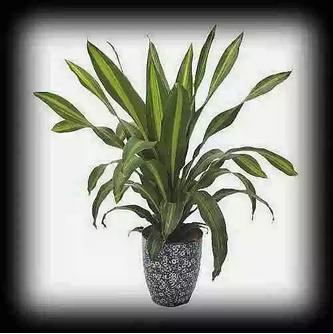 【实用】需要净化空气?最全吸毒植物,赶紧搬回家!