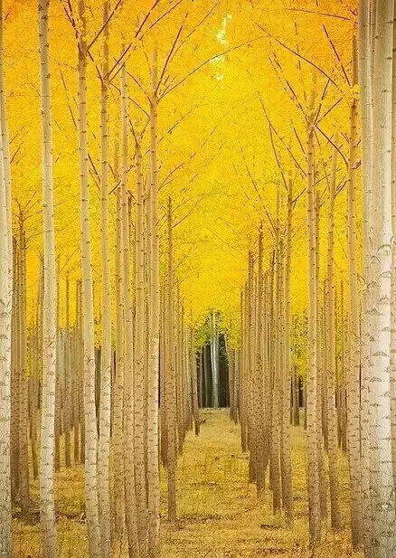 【荐读】行走在唐诗宋词的秋天里
